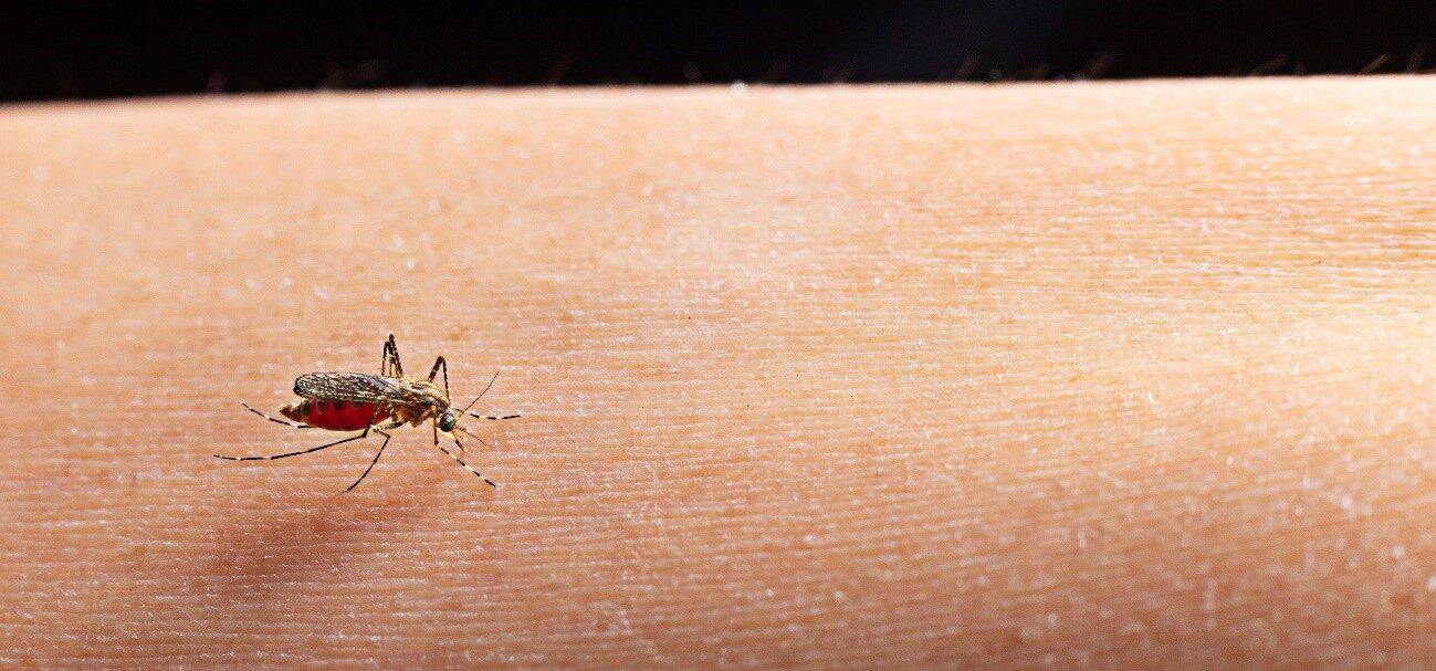 Mosquito na pele dehumana